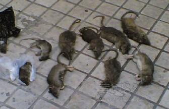 岳阳灭鼠公司电话